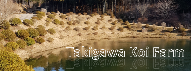 Takigawa Koi farm - R & R Koi Travel